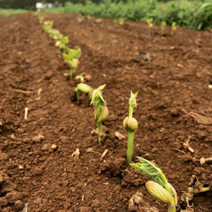 In the Garden: Support Organics One Seed at a Time