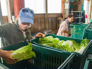 Connecting Students to Local Food and Farming