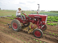 Cultivation and Weed Control