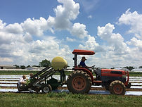 Seeding, Transplanting and Field Management