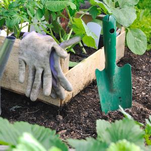 In The Garden: Interplanting