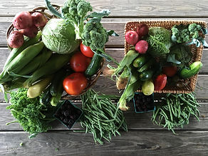 Elmwood CSA share mini and regular.jpg