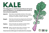 New version of Kale front .png