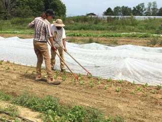 In the Garden: Managing Weeds Organically