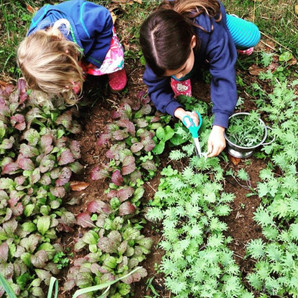 In the Garden: Starting Your Own