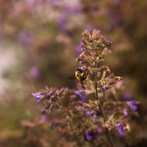 In the Garden: Pollinator Habitat