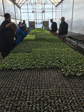Organic Transplant Production Field Day