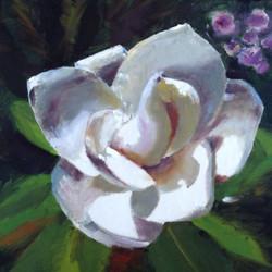 Summer Magnolia