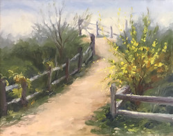 Cape May Path to Beach