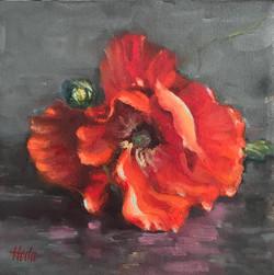 Poppies study, 8 x 8