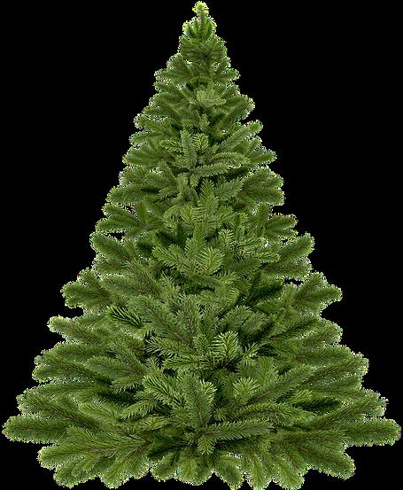 christmas-tree-christmas-1796131_960_720