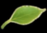 kisspng-leaf-apple-apple-leaves-apple-le
