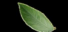 ACCUEIL | ABATTAGE ARBTEC | ÉMONDAGE | ÉLAGAGE | ABATTAGE