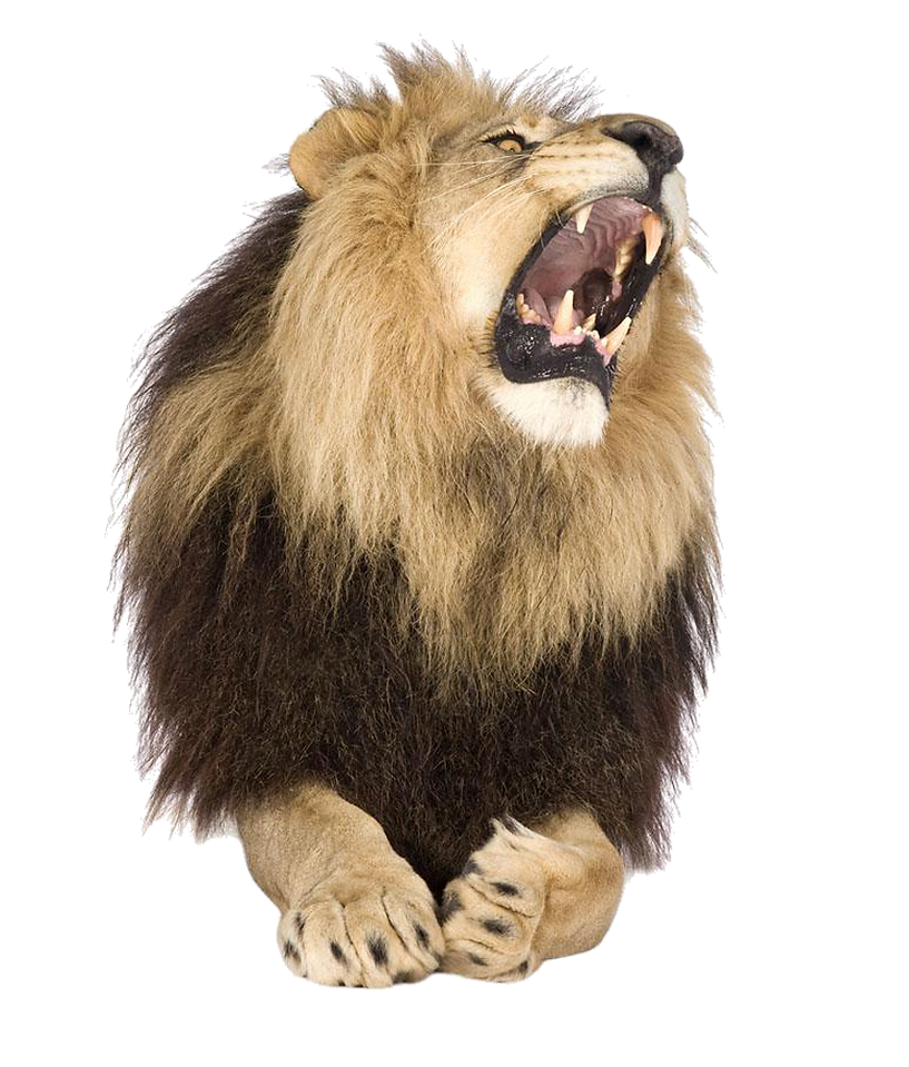 kisspng-lion-roar-stock-photography-shut