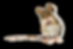 AGENCE LENOX - Lac-Etchemin | Design graphique - Logo, publicité d'affichage, médias sociaux, dépliants, flyers, roll up, etc