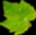 leaf-png-38624.png