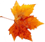 Autumn-Free-PNG-Image.png