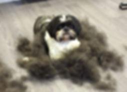 Dog grooming totnes