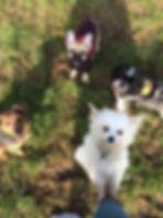 Dog grooming totmes