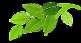 Gruppe von Green Leaves