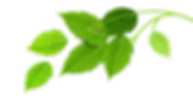 緑の葉のグループ