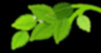 Cazare - Fratii Jderi Utopia Verde