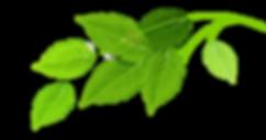 Gruppe af grønne blade