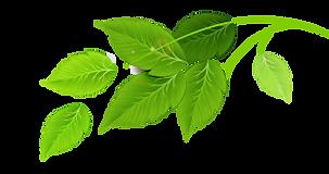 Groep van groene bladeren