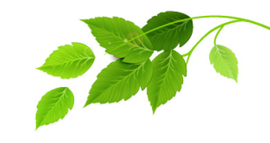 Group of Green Leaves