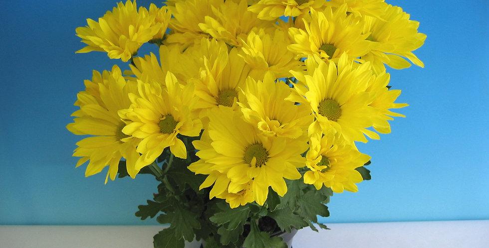 Billings Yellow