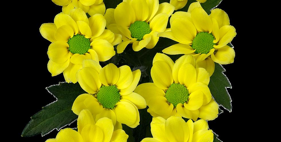 Ringa Yellow