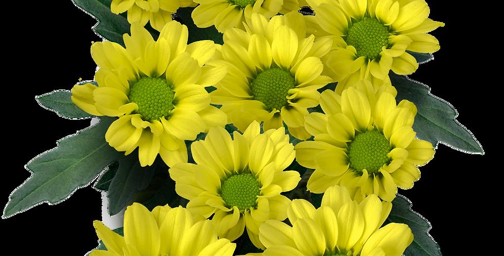 Lindi Yellow