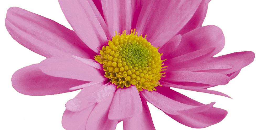 Omega Time Pink