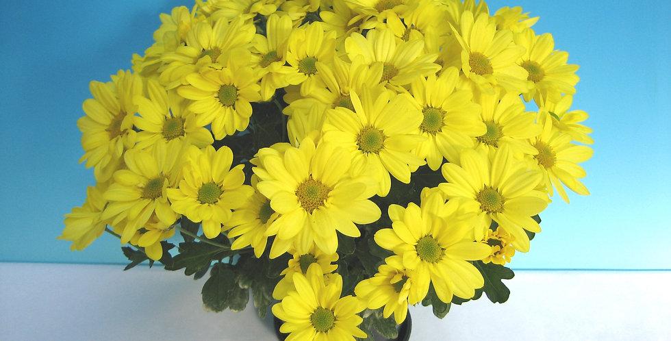 Tampico Yellow
