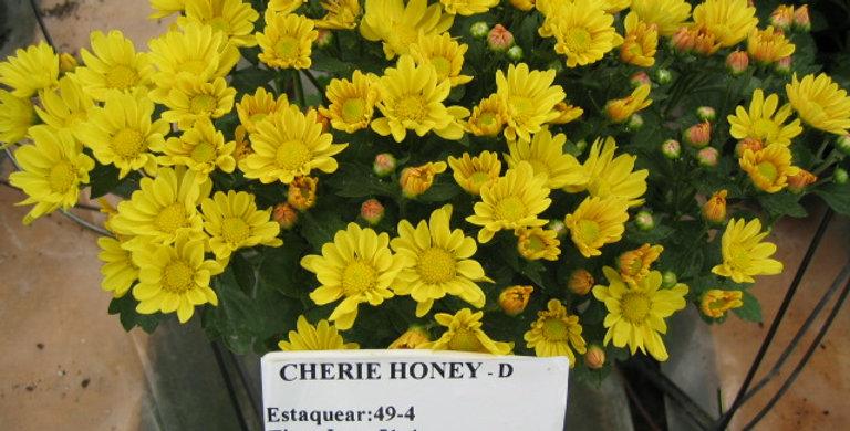 Cherie Honey