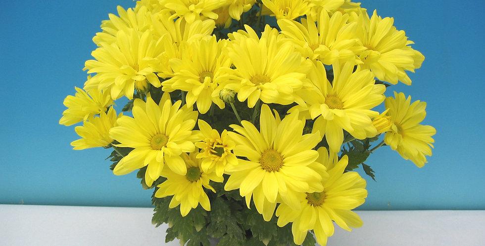 Danielson Yellow