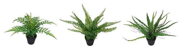 PLANT IN POT 33CM / 13IN