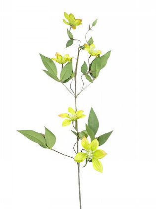 """""""35"""""""" CLEMATIS SPRAY X 3 YELLOW"""""""