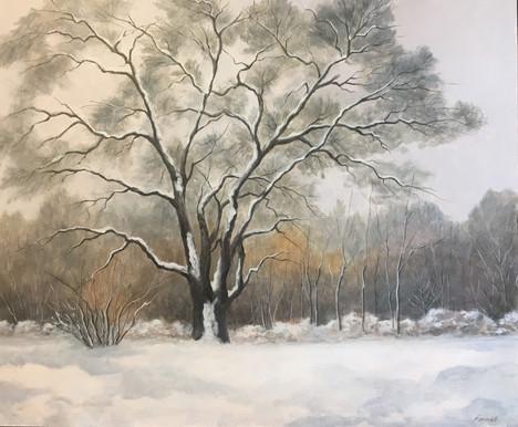 snow.tree_4858.jpg