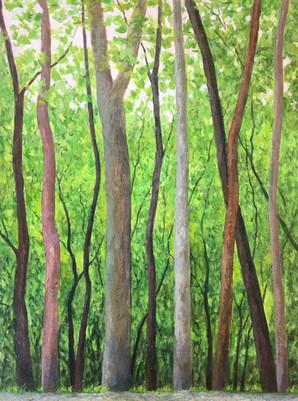 trees.trail_4335.jpg