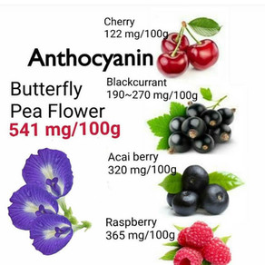 The Benefits of Anthocyanins in Butterfly Pea