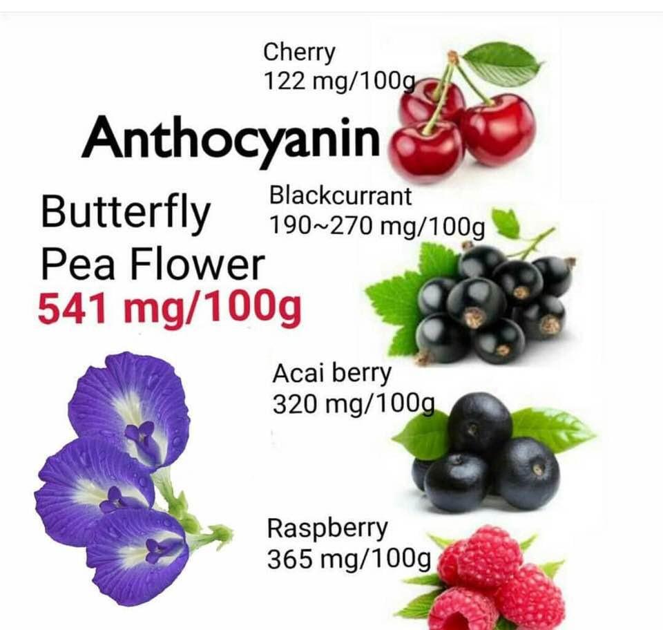 Anthocyanins | BREW BLUE TEA | My Blue Tea