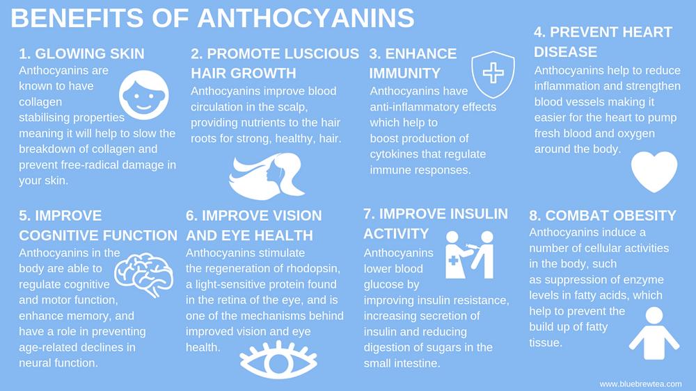 Anthocyanins | Blue Tea | MY BLUE TEA