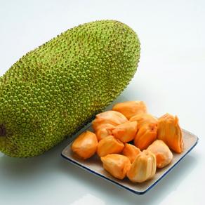 NEW! Introducing Jackfruit Powder (Cempedak)