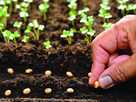 Free Vegetables Seeds to be Given