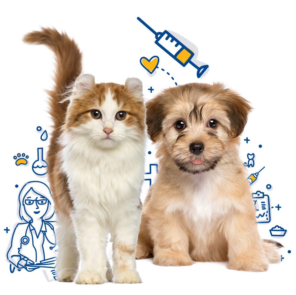 Photo Courtesy: Mercy Pet Clinic