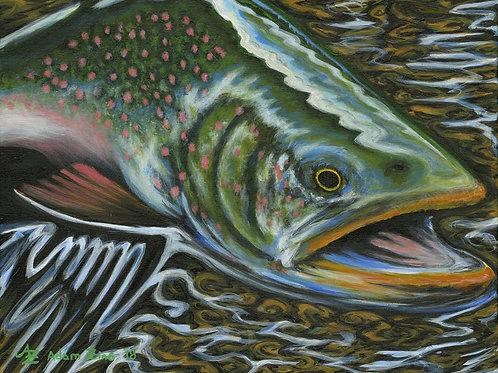 Surface Salmon