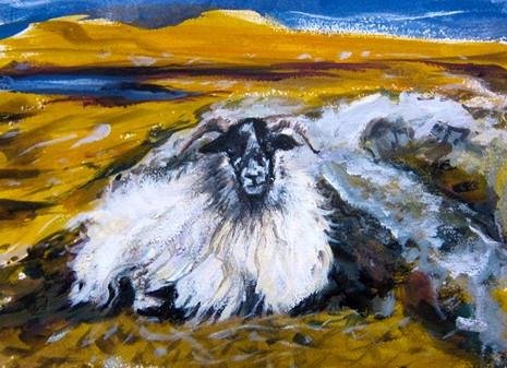 Quidinish Sheep