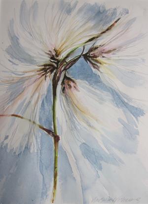 Cotton Grass (Canach)