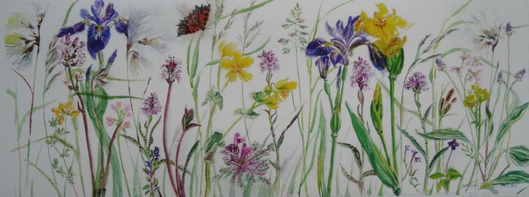 Fluraichean Innse Gall (Hebridean Flowers)